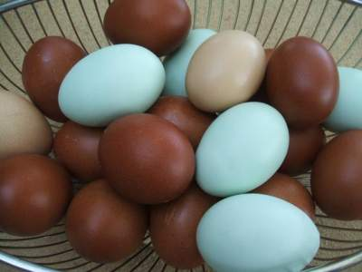 black copper marans eggs per year
