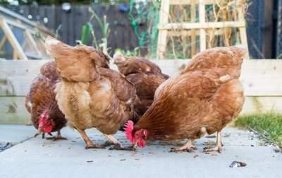 cinnamon queen chicken