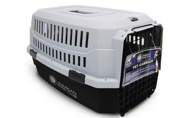 dog crate vs carrier