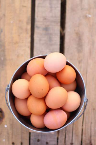 speckled sussex chicken egg color