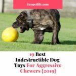 indestructible dog toys amazon