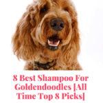 best shampoo for Goldendoodles