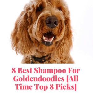 8 Best Shampoo For Goldendoodles Top 8 Picks In 2019