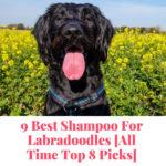 best shampoo for Labradoodles
