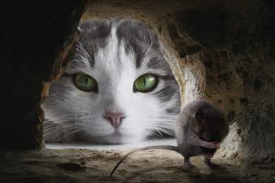 Cute cat hunting mice