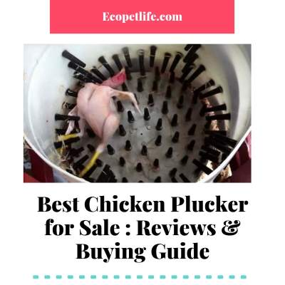 mother of all chicken pluckers
