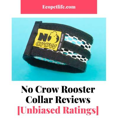 no crow rooster collar ebay