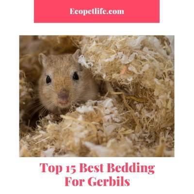 Top 15 Best Bedding For Gerbils