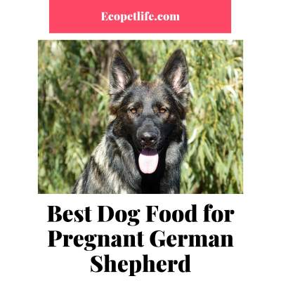 Best Dog Food for Pregnant German Shepherd