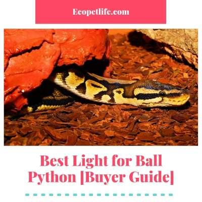 Best Light for Ball Python