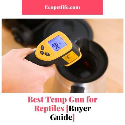 Best Temp Gun for Reptiles