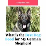 What is the Best Dog Food for My German Shepherd