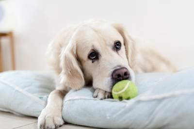 adopted dog misses owner