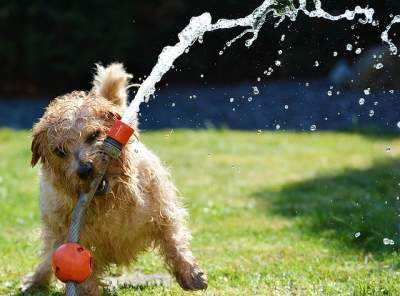 best colloidal silver for dogs