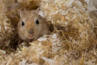 best gerbil bedding for tunnels