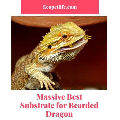 best substrate for bearded dragon