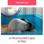 deep gerbil cage