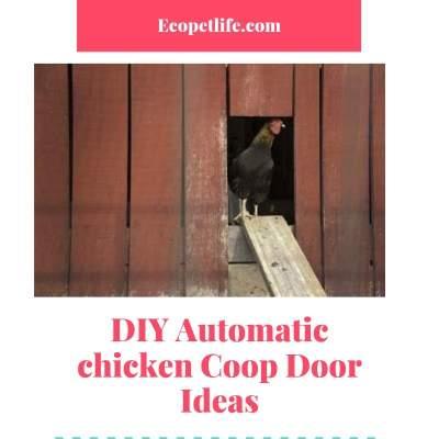 Diy Automatic Chicken Coop Door Best Guide On Budget