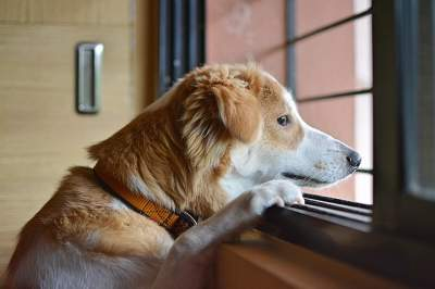 how does a dog feel when rehomed