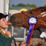best calmer for nervous horses