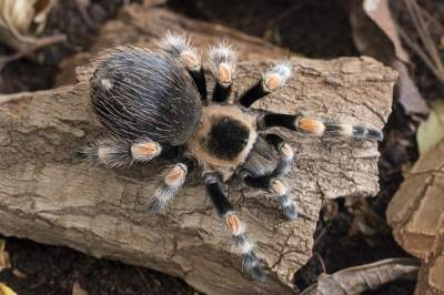 best substrate for tarantulas