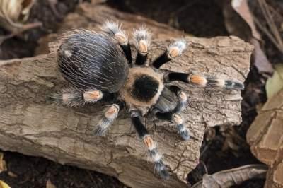 best substrate for tarantulas