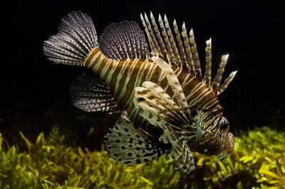 55 gallon aquarium filter