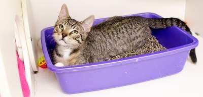 How Often Should I Clean The Cat Litter Box