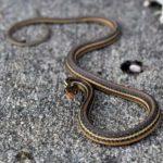 Best Snake Gaiters