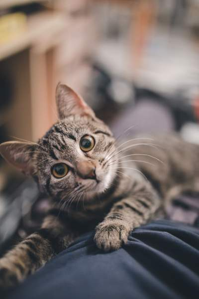 Clever Cat Litter Box Reviews
