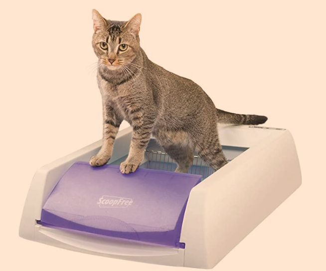 ScoopFree Self-Cleaning Litter Box Review
