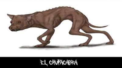 chupacabra dog breed