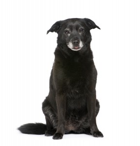 treating Senility in Dogs
