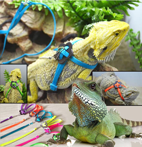 What should you know when owning a bearded dragon?